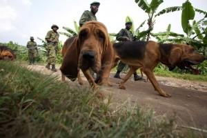 Bloodhounds helfen Wilderer zu finden